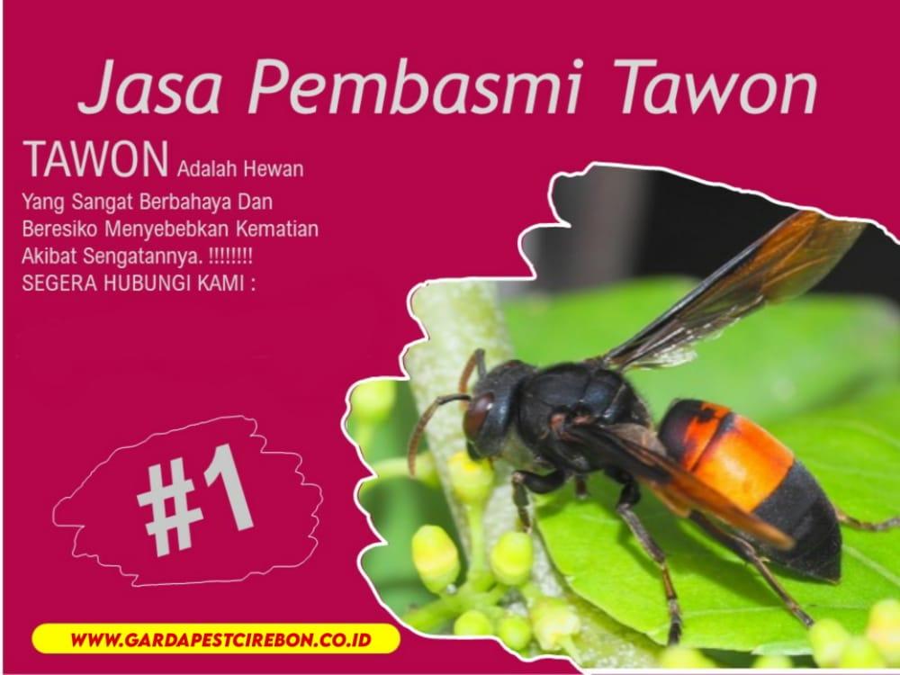Jasa Pembasmi Sarang Tawon di Bekasi