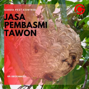 Jasa Pembasmi Sarang Tawon di Bandung